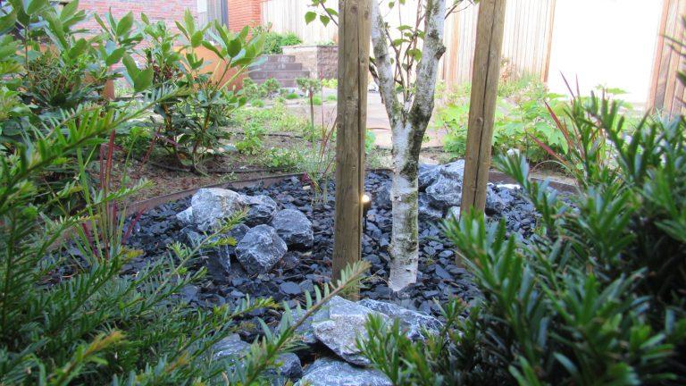 japanse tuin beplanting